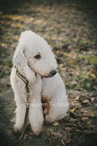 amore-per-il-proprio-cane-001