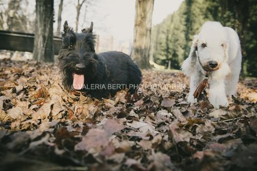 amore-per-il-proprio-cane-004