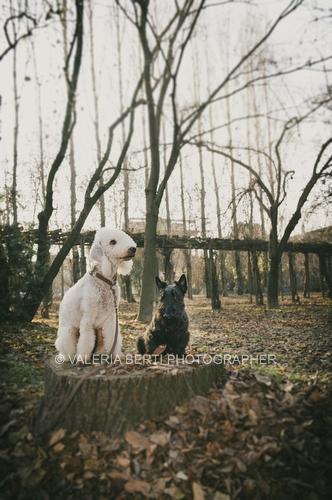 amore-per-il-proprio-cane-007