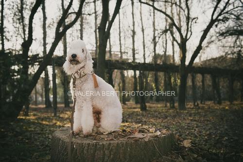 amore-per-il-proprio-cane-008
