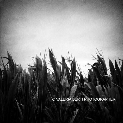 fotografia-bianco-e-nero-padova