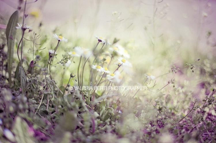 fotografia-primavera-padova