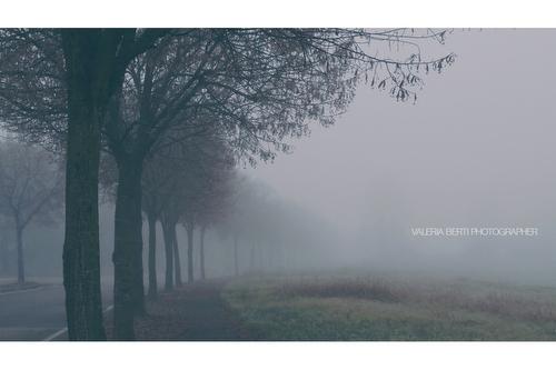 fotografie-di-padova-con-la-nebbia-002