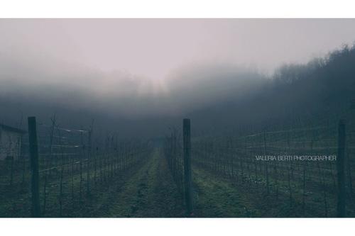 fotografie-di-padova-con-la-nebbia-004