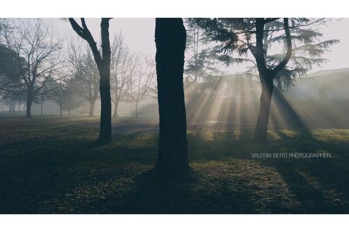 fotografie-di-padova-con-la-nebbia-007