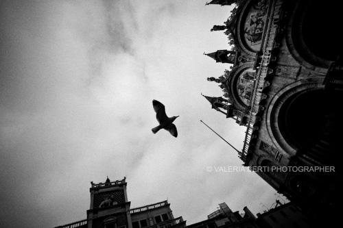 Nuove fotografie in galleria Venice