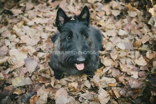 fotografie-ritratto-con-il-cane-004