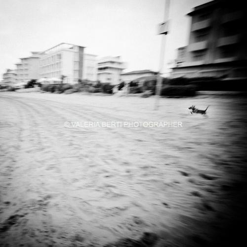 fotografo-padova-cani