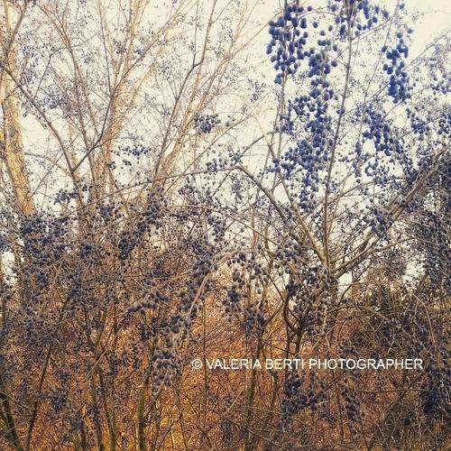 fotografo-padova-smartphone-002