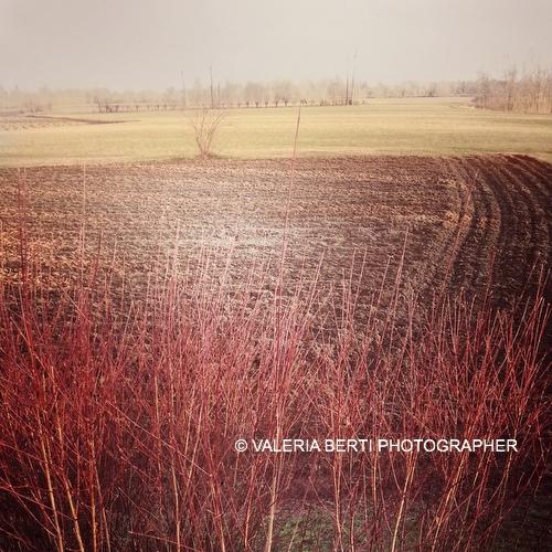 fotografo-padova-smartphone-003