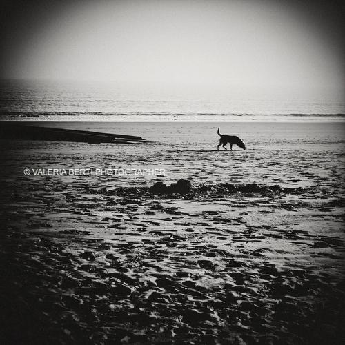 fotografo-ritratto-cani