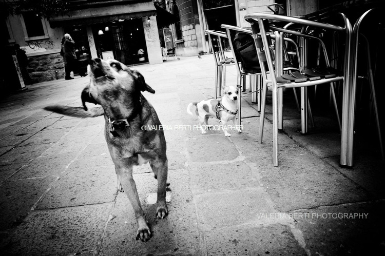 cani-street-photography-001