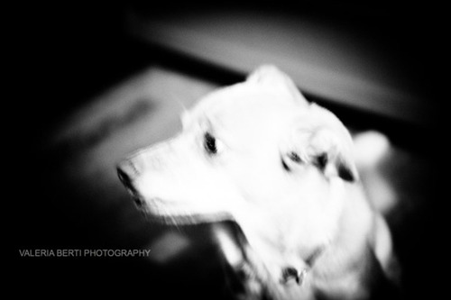 cani-street-photography-003