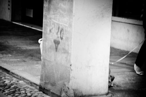 cani-street-photography-004