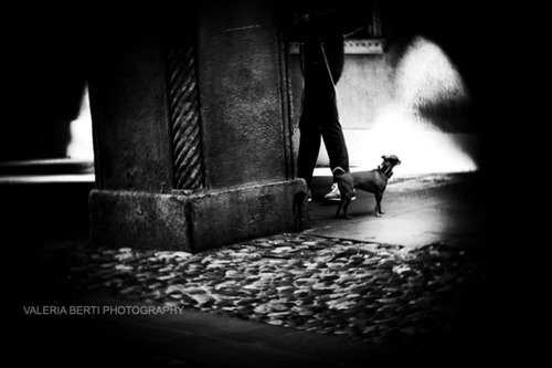 cani-street-photography-008