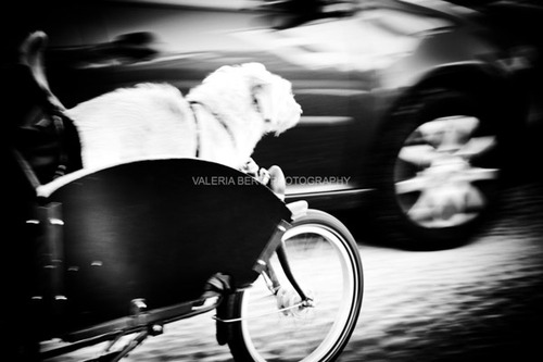 cani-street-photography-009
