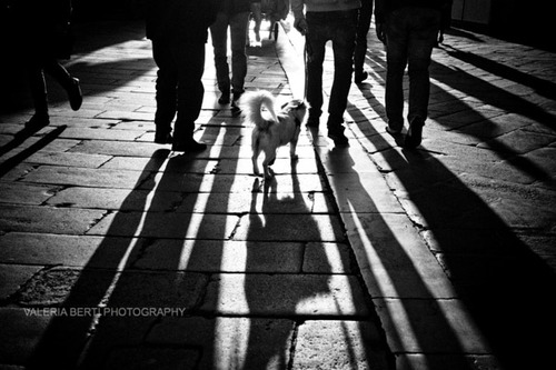 cani-street-photography-010