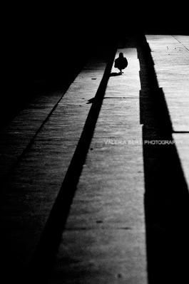 fotografo-venezia-005