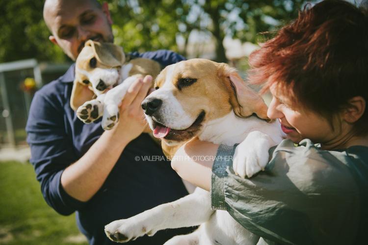 Ritratti in allevamento di beagle whiteax